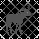 Reindeer Moose Icon
