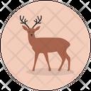 Reindeer Antlers Christmas Animal Wild Animal Icon