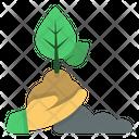 Replant Icon