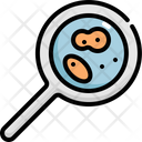 Research Bacteria Icon