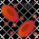 Rh Negative Rh Fector Negative Blood Cell Icon