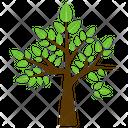 River Birch Icon