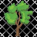 River Birch Betula Icon