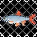 Roach Fish Icon