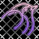 Robbin Icon