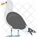 Feather Creature Fowl Humming Pigeon Icon