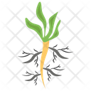 Roots Plant Plant Roots Icon
