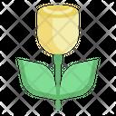 Rose Valentine Love Icon