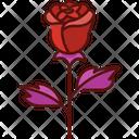Rose Flower Beautiful Icon