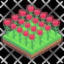 Rose Fields Flowers Garden Floral Garden Icon