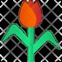Rose Flower Rose Flower Icon