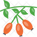 Rose Hips Icon