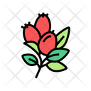 Rosehip Aromatherapy Color Icon