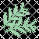 Rosemarry Icon