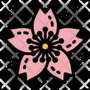 Sakura Flower Spring Icon
