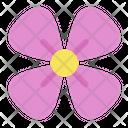 Sakura Flower Floral Icon