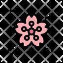 Sakura Flower Sakura Flower Icon