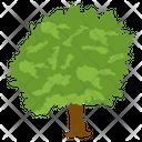 Salix Caprea Wild Tree Shrub Icon