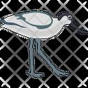 Sandhill Crane Icon
