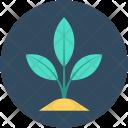 Sapling Seedling Plant Icon