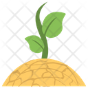 Saplings Seedlings Baby Tree Icon