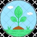 Sapling Sprouting Germination Icon