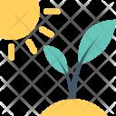 Sapling Plant Seedling Icon