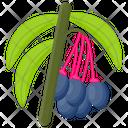 Saskatoon Berries Icon