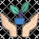 Save Plant Plant Care Donation Icon
