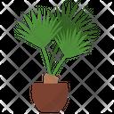 Saw Palmetto Plant Icon