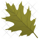 Scarlet Oak Icon