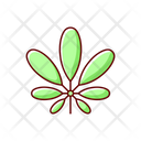 Schefflera Leaf Plant Icon