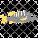 School Master Fish Icon