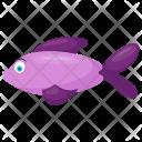 Scissor Tail Rasbora Trilineata Purple Icon