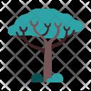 Sclerocarya Tree Nature Icon