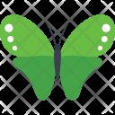 Scotch Argus Fly Icon