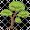 Scots Pine Tree Icon