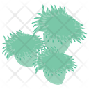 Sea Anemones Icon