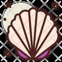 Sea Shell Shell Decoration Icon