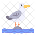 Seagull Bird Animal Icon