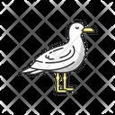 Seagull Animal Wildlife Icon