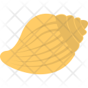Seashell Sea Mollusk Icon