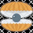 Seashell Pearl Mollusk Mollusc Icon