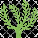 Algae Seaweed Bloom Icon