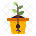 Seed Growth Icon