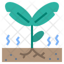 Seedling Sprout Growth Icon