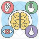 Sensory Activities Senses Sensory Systems Icon