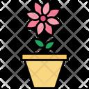 Shamrock Pot Plant Flowering Plant Icon