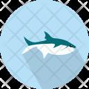Shark Sealife Fish Icon