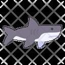Shark Animal Wild Icon